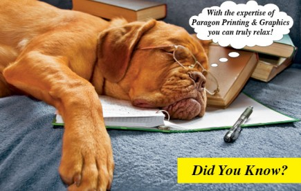 sleeping-dog-postcard-e1360537942743